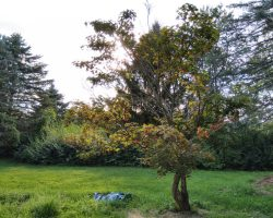 نمونه عکس ثبت شده با دوربین گوشی نوکیا 6
