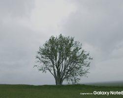 نمونه تصاویر ثبت شده با دوربین گوشی Galaxy Note 8