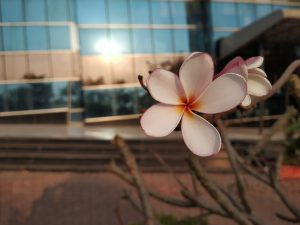 عملکرد دوربین شیائومی Redmi Note 5 Pro