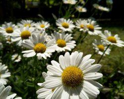 نمونه عکس ثبت شده با گوشی نوکیا 8 سیروکو