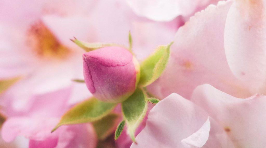 تصویری ماکرو از یک گل