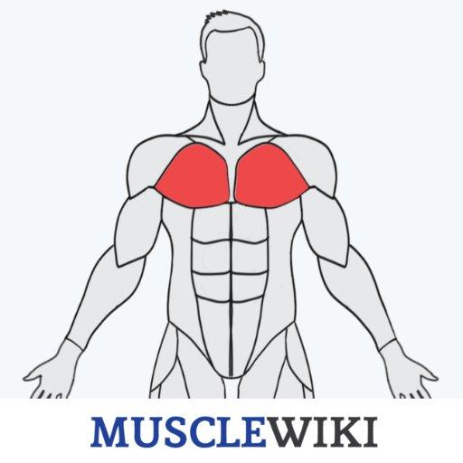 musclewiki.org
